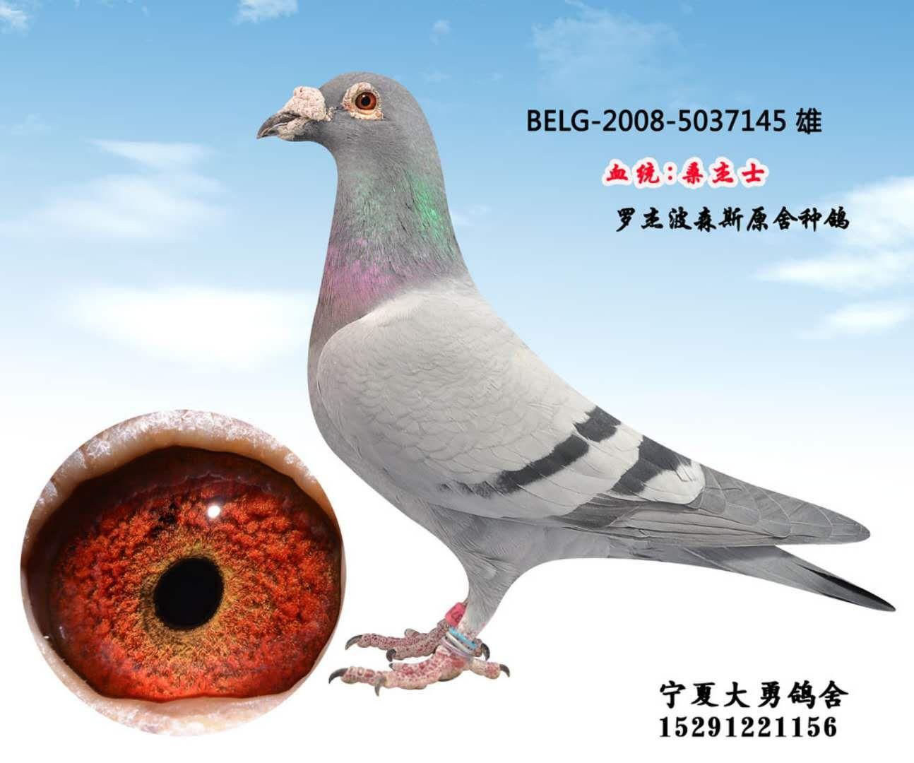 看看TA的鸽舍简介