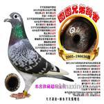 广东图图兄弟鸽舍