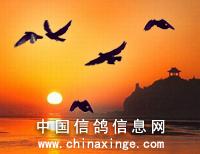 河北永胜丝网制品厂