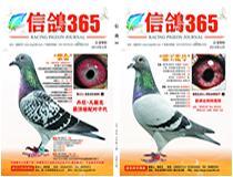 《信鸽365》杂志