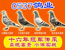 0537赛鸽竞技店
