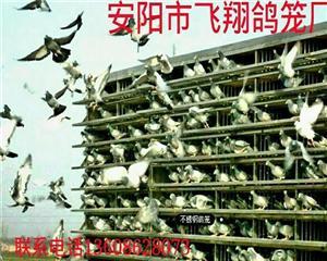 飞翔鸽笼厂
