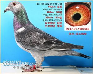 北京宝石鸽业