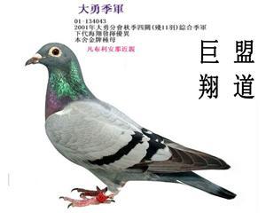 台湾巨盟竞翔事业