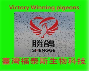 台湾福泰斯(胜鸽)生物科技