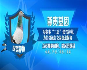 深圳市尊贵科技有限公司