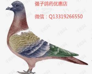 强子鸽业保健品优惠店