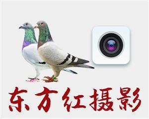 东方红信鸽摄影学校