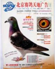 《赛鸽天地》杂志