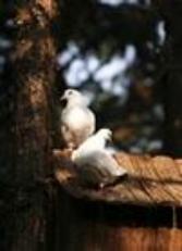 《湖北赛鸽运动》杂志