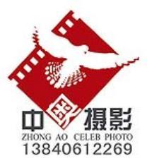 辽宁中奥赛鸽摄影