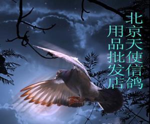 北京天使信鸽用品批发店
