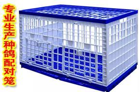 浙江台州黄岩声远塑模厂精品种鸽配对笼,欢迎您的订购