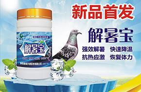 """炎炎夏日给您的爱鸽来杯""""冰饮""""吧"""