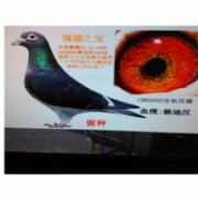 安徽阳光金鸽集团