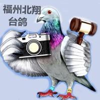 福州北翔台鸽