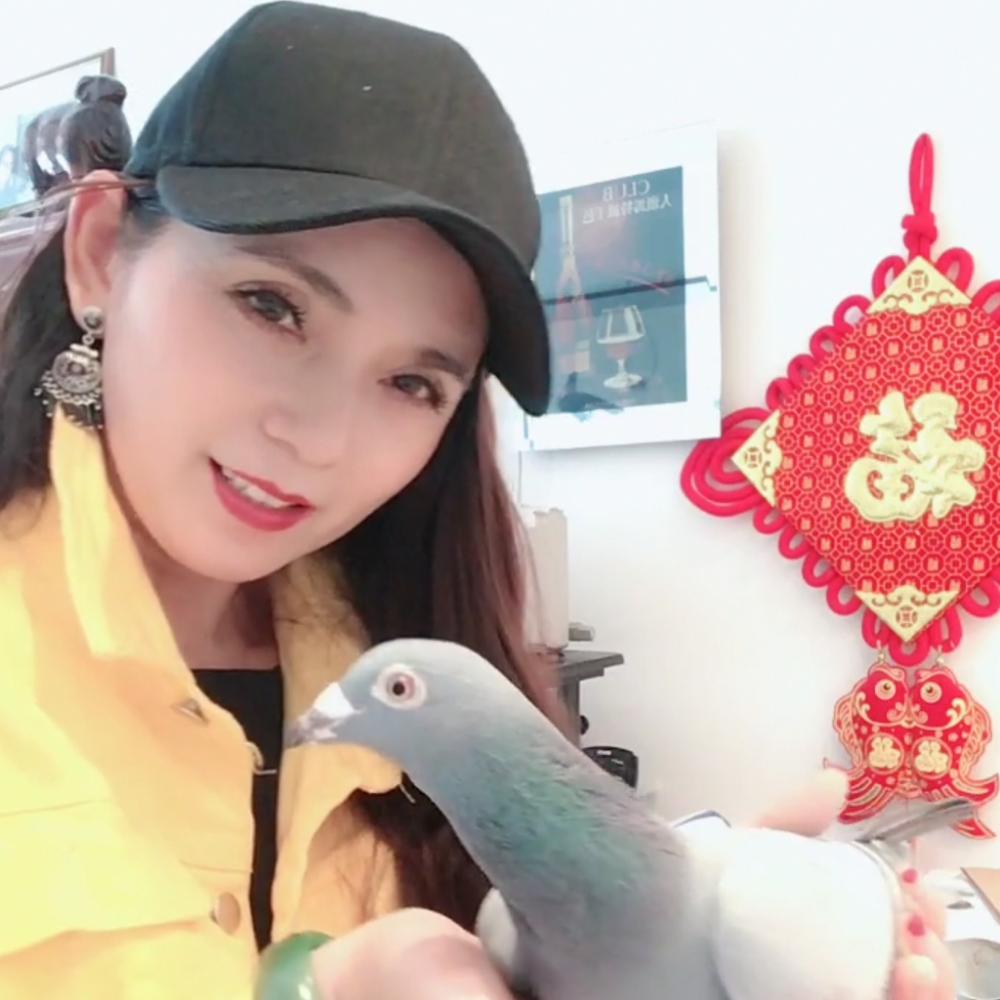 北京中鸽国际鸽业