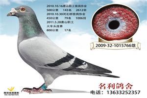 2015年天津津福公棚鸽王冠军之父