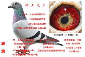 苏氏鸽业――鸽王之王