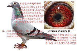 乐鲲赛鸽育种中心――经典拍卖