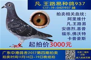 广州中港鸽舍实战鸽系拍卖第四期19日晚结拍