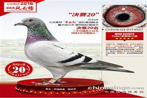 辽宁梅振江17年精品幼鸽拍卖中