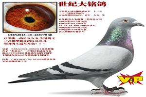 大海赛鸽联盟年度回归鸽友