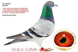 2014年KBDB全国速度鸽王
