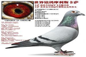 大海赛鸽联盟年度回馈鸽友