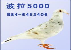 波拉5000