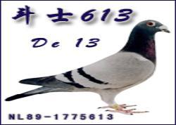 """荷兰一代宗师克拉克代表作传奇名鸽""""斗士613"""""""