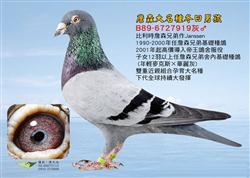 """詹森兄弟最后的大名鸽""""冬日男孩"""""""