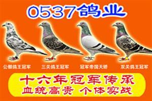 0537鸽舍- 【2018年公棚+特比合作方案】
