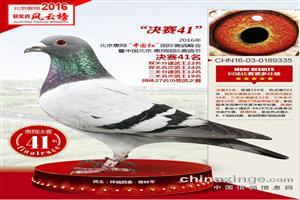 辽宁梅振江回馈鸽友 精心挑选4羽高质量种鸽 零元起拍 敬请关注
