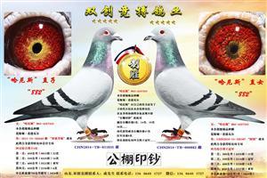 双创竞搏鸽业种赛鸽专辑
