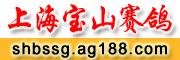 上海宝山赛鸽