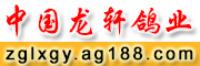 中国龙轩鸽业