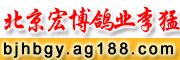 北京宏博鸽业-李猛