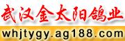 武汉金太阳鸽业