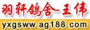 羽轩鸽舍-王伟