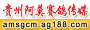 贵州阿莫赛鸽传媒