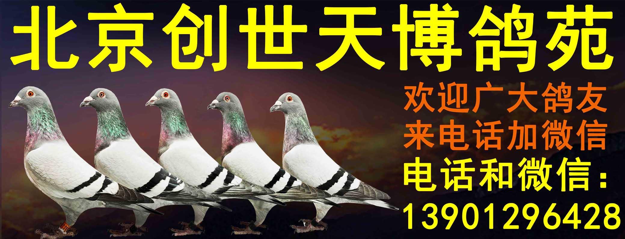 北京��世天博��苑